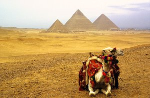 The Pyramides of Giza
